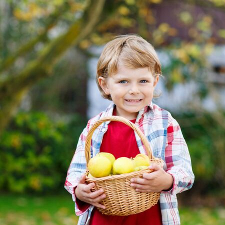 own: Preschool kid boy with fresh apples in homes garden, outdoors. Own harvest.