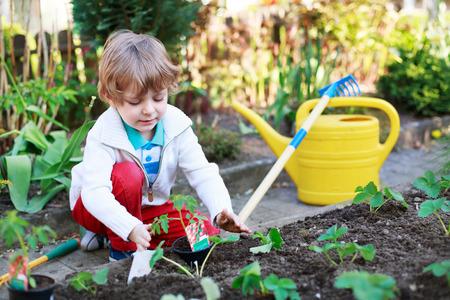 Schattige preschool blonde jongen het planten van zaden en zaailingen van tomaten in de moestuin