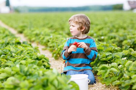 Funny little kid boy picking and eating strawberries on organic bio berry farm in summer, on warm sunny day. Harvest fields in Germany. photo
