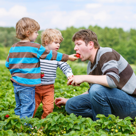 Two little funny kid boys and their father on organic strawberry farm in summer, picking and eating fresh ripe berries. Happy family spending time together. Children helping dad. Stock Photo
