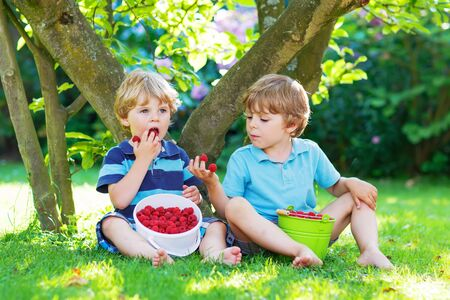 Two adorable little friends boys eating fresh organic raspberries from homes garden, outdoors. Healthy food and snack for kids in summer.