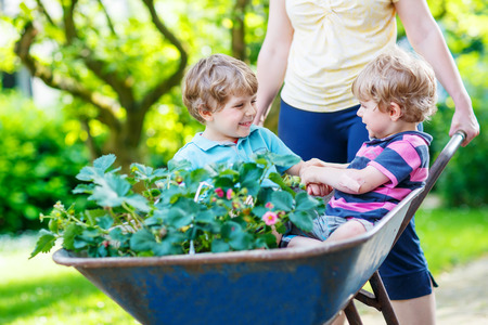 domestic garden: Two little boys playing and having fun in a wheelbarrow pushing by mother  in domestic garden, on warm sunny day. Active outdoors games for kids in summer. Stock Photo