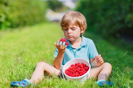 hot day: Cute little child happy about his harvest on raspberry farm on warm hot sunny day, outdoors. Kid boy eating ripe berries as healthy food snack in summer. Stock Photo