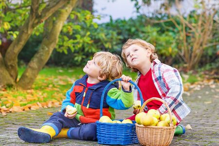Two adorable kids picking and eating  apples in homes garden, outdoors. Own harvest. Boys in colorful rubber boots on autumn day.