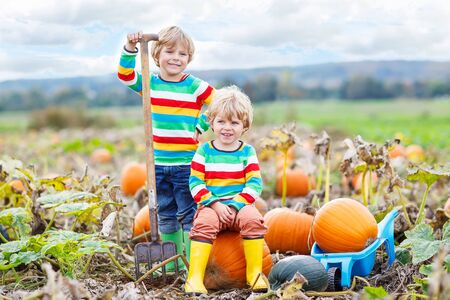 young  family: Two little friends sitting on big pumpkins on autumn day, choosing squash for halloween or thanksgiving on pumpkin patch. Kid boys having fun with farming.