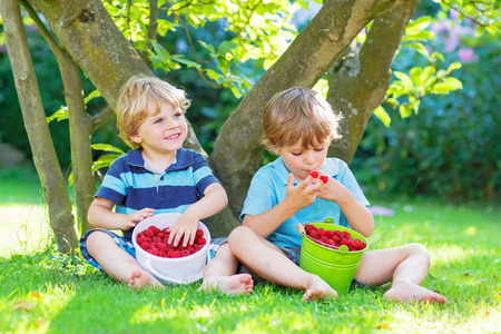 sibling: Two cute little sibling boys eating fresh organic raspberries from homes garden, outdoors. Healthy food and snack for kids in summer.