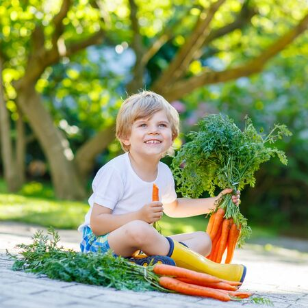 domestic garden: Blond kid boy of 3 years with carrots in domestic garden. Child gardening and eating outdoors. Healthy organic vegetables for kids