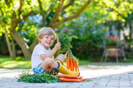 domestic garden: Cute little kid boy with carrots in domestic garden. Child gardening and eating outdoors. Healthy organic vegetables for kids Stock Photo