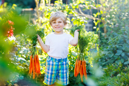 farm boys: Funny smiling kid boy with carrots in domestic garden. child gardening outdoors. Healthy organic vegetables for kids