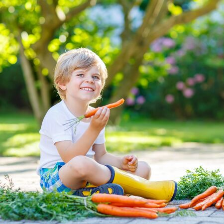 domestic garden: Adorable little child with carrots in domestic garden. Kid gardening and eating outdoors. Healthy organic vegetables for kids