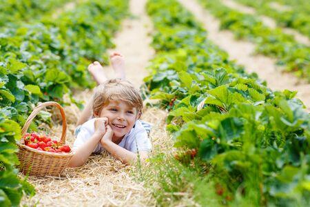 niños rubios: Adorable niño pequeño niño rubio recoger y comer fresas en la granja de la baya bio orgánica en verano, en el cálido día soleado. Campos de la cosecha en Alemania. Alimentos sanos para los niños. Foto de archivo