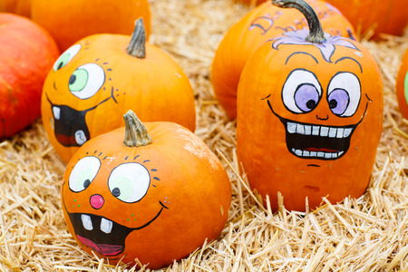 bunch of plump and juicy holiday pumpkins on farm or patch. Orange pumpkins for Jack olantern or thanksgiving. Self decorated with scary faces