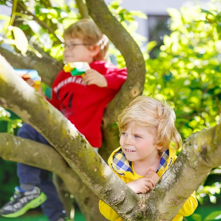 domestic garden: Active sibling boys enjoying climbing on tree. Toddler children learning to climb, having fun in domestic garden on warm sunny day, outdoors.