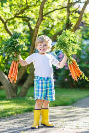 domestic garden: Happy little kid boy with carrots in domestic garden. Child gardening and eating outdoors. Healthy organic vegetables for kids Stock Photo