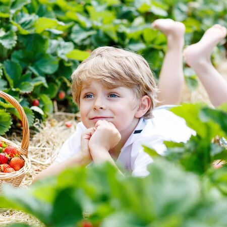 harvest: Beautiful kid boy having fun with picking strawberries on organic bio berry farm in summer, on warm sunny day. Harvest fields in Germany. Healthy food for children.
