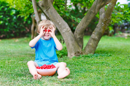 domestic garden: Little blond kid boy having fun with picking and eating cherries in domestic garden on warm summer day, outdoors. Healthy snack for children in summer. Kids helping with gardening