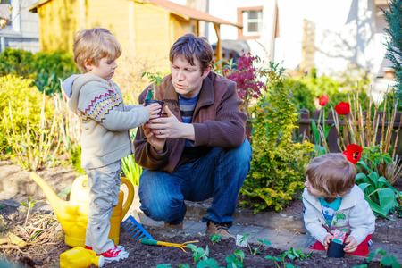 family gardening: Happy family of three: Two little kids boys and dad planting seeds and seedlings in vegetable garden, outdoors. Man and sons, twins having fun with gardening in spring.