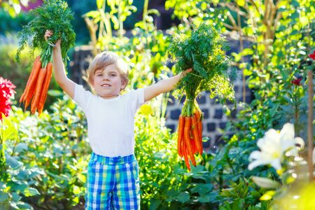 domestic garden: Funny smiling kid boy with carrots in domestic garden. child gardening outdoors. Healthy organic vegetables as snack for kids and kindergarten children Stock Photo
