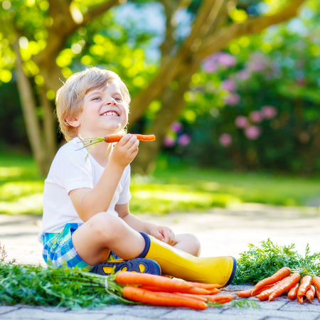 domestic garden: Adorable little child with carrots in domestic garden. Kid gardening and eating outdoors. Healthy organic vegetables as snack for kids and kindergarten children