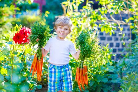 domestic garden: Funny smiling kid boy eating and picking carrots in domestic garden. child gardening outdoors. Healthy organic vegetables as snack for kids and kindergarten children Stock Photo