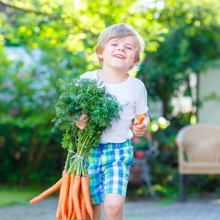 domestic garden: Happy smiling kid boy eating and picking carrots in domestic garden. child gardening outdoors. Healthy organic vegetables as snack for kids and kindergarten children Stock Photo