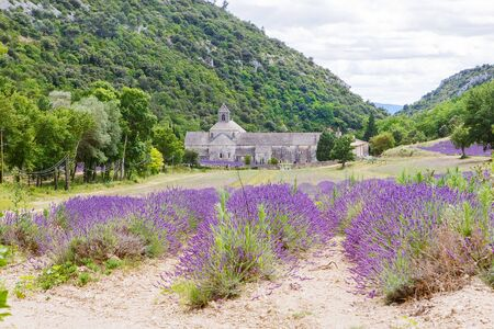 senanque: Abbey of Senanque and blooming rows lavender flowers. Gordes, Luberon, Vaucluse, Provence, France, Europe. Stock Photo
