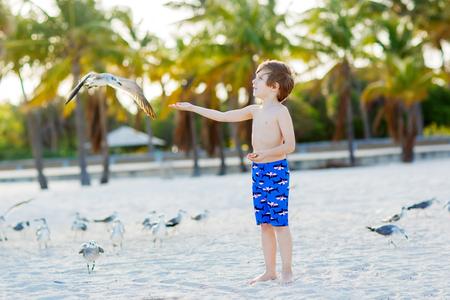 key biscayne: Adorable active little kid boy having fun on Miami beach, Key Biscayne. Happy cute child feeding seagull birds on sunny warm day near palms.