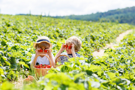 Two little sibling kids boys having fun on strawberry farm in summer. Children, cute twins eating healthy organic food, fresh berries as snack. Stock Photo