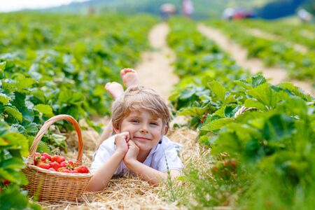 Happy blond preschoool little kid boy picking and eating strawberries on organic bio berry farm in summer, on warm sunny day. Harvest fields in Europe.