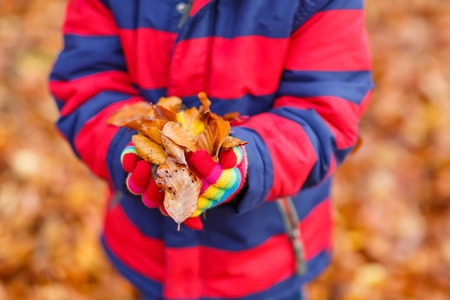 kiddies: Little kid holding autumn leaves in hands with fall background in colorful clothing. Funny child having fun in fall forest or park on cold day. With gloves and red jacket