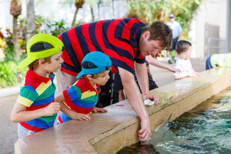 observing: Young teacher and two little kid boys feeding rays in a recreation area on a school trip. Man and preschool children having fun with observing fishes.