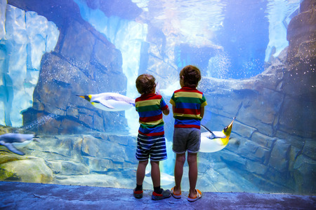 animal watching: Two little kid boys observing penguins in a recreation area. Cute siblings, preschool children having fun with watching animal life.