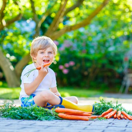domestic garden: Adorable smiling kid boy eating and picking carrots in domestic garden. child gardening outdoors. Healthy organic vegetables as snack for kids and kindergarten children