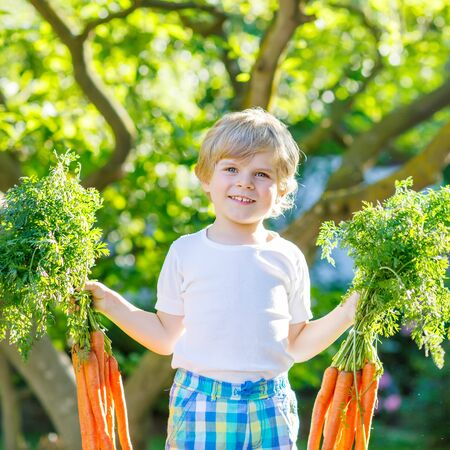 domestic garden: Adorable little kid boy with carrots in domestic garden. Child gardening and eating outdoors. Healthy organic vegetables for kids Stock Photo