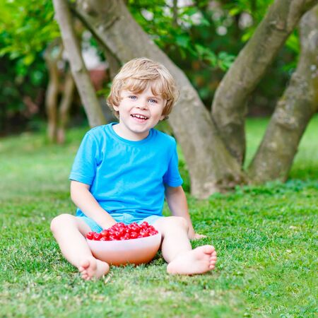 domestic garden: Little blond kid boy eating cherries in domestic garden on warm summer day, outdoors. Healthy snack for children in summer. Kids helping with gardening Stock Photo
