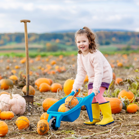 Adorable little girl of three years having fun with farming on a pumpkin patch. Traditional family festival with children, thanksgiving and halloween concept. Cute farmer. Stock Photo