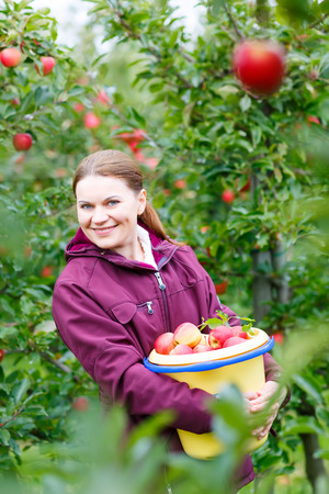 farm girl: Young happy woman picking red organic fresh apples on organic farm. Girl having fun with harvesting of fresh healthy fruits