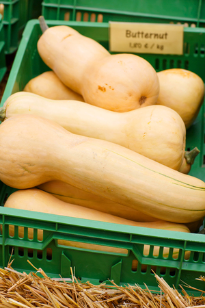bunch of plump and juicy holiday pumpkins on farm or patch. Different pumpkins for Jack olantern or thanksgiving. Butternut squash Stock Photo