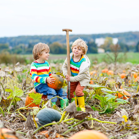 Two little kids boys sitting on big pumpkins on autumn day, choosing squash for halloween or thanksgiving on pumpkin patch. Children, best friends having fun with farming.