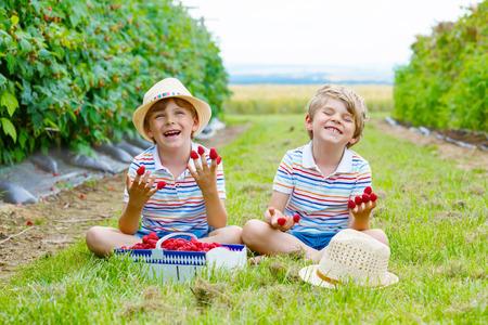 Two little friends, kid boys having fun on raspberry farm