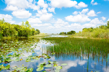 Florida wetland, Airboat ride at Everglades National Park in USA.