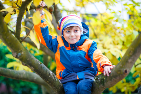 little kid boy in colorful clothes enjoying climbing on tree on autumn day