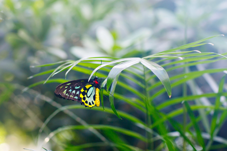 A shallow focus closup image of a beautiful Butterfly