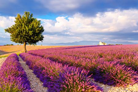Lavendel velden in de buurt van Valensole in de Provence, Frankrijk.
