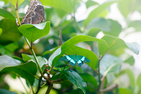 Un punto di chiusura focale poco profondo di una bella farfalla Archivio Fotografico - 81543073