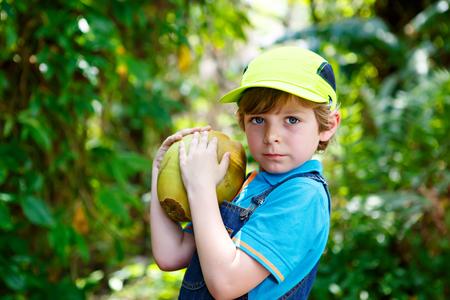 Happy funny little preschool kid boy holding huge coconut.