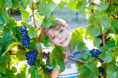 Gelukkige blonde jong geitjejongen met rijpe blauwe druiven Stockfoto