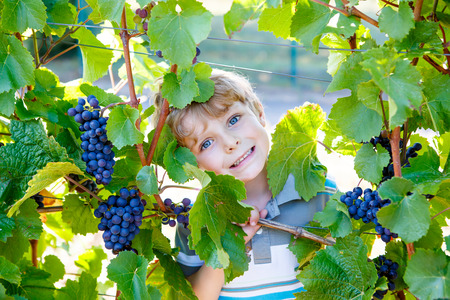 Happy blond kid boy with ripe blue grapes