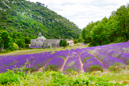 Abbey of Senanque and blooming rows lavender flowers. Gordes, Luberon, Vaucluse, Provence, France, Europe. 版權商用圖片