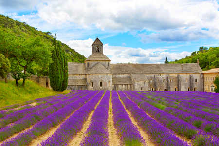 Abbey of Senanque and blooming rows lavender flowers. Gordes, Luberon, Vaucluse, Provence, France, Europe. Фото со стока